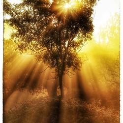 magisch morgenlicht