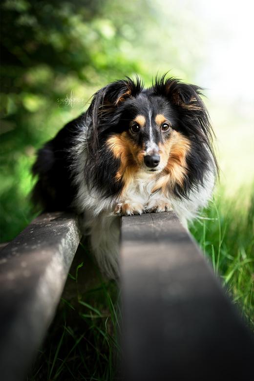 Skye op een bankje - Skye op een bankje in de zomer