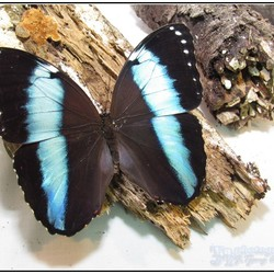 butterfly as shot