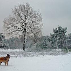 winterlandschap.jpg