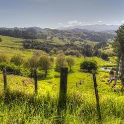 Nieuw - Zeeland 393