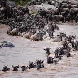 Crossing Serengeti Tanzania