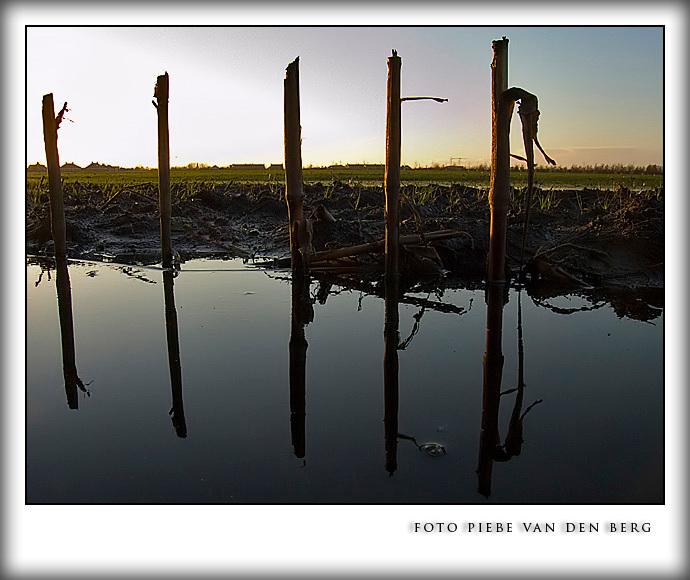 Mais stengels - Vanmiddag 26 november gaf de zon een prima weerspiegeling van de mais stengels te zien.