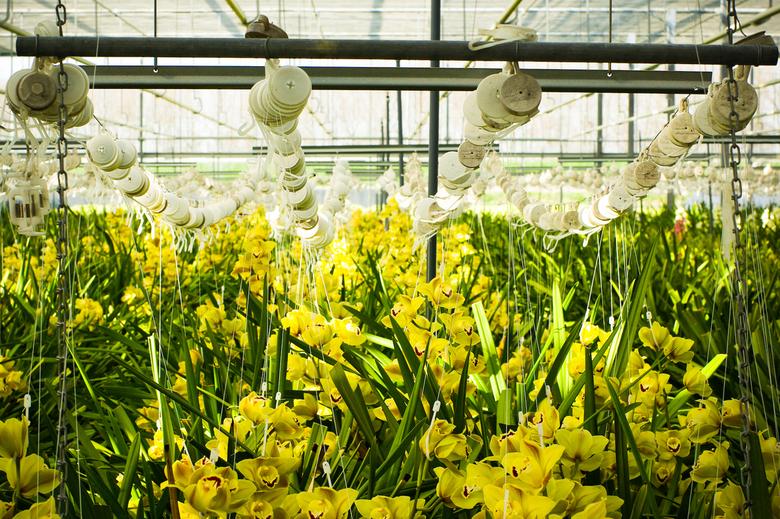 Kom in de kas 03 - Op 31 maart en 1 april 2007 was het weer 'Kom in de kas', een uitgelezen moment om de productie van bloemen en groenten o
