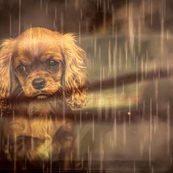 Het regent weer