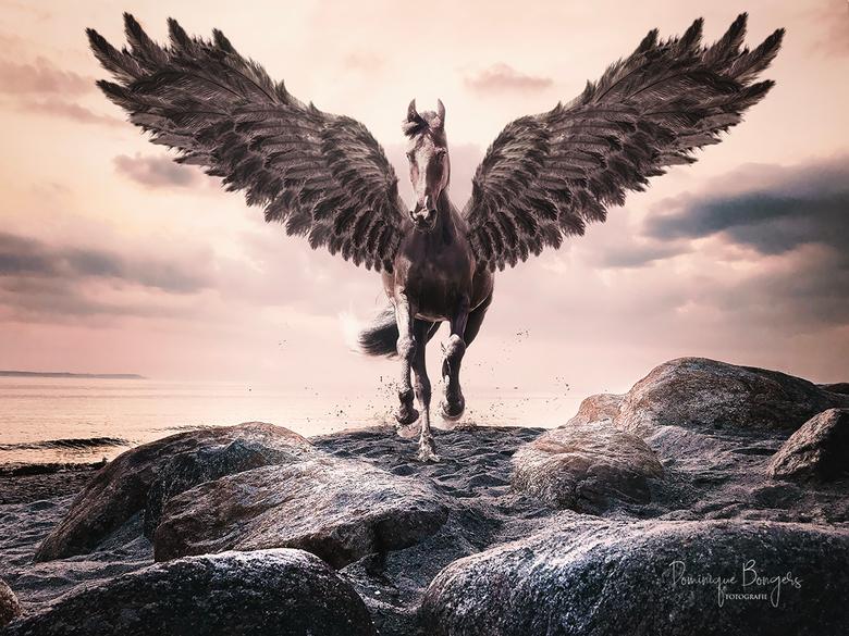 Black Pegasus - BLACK PEGASUS <br /> Het was heel eventjes wat langer stiller, alleen maar omdat ik iets meer liefde en aandacht aan dit beeld wilde