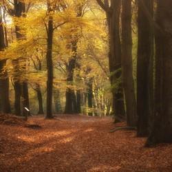 herfst dromerijtjes