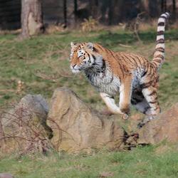 Grote kat in actie