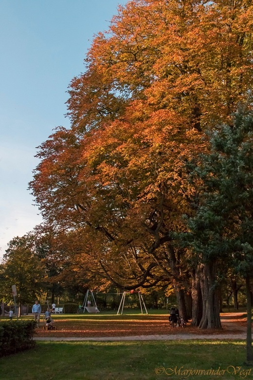 Herfst - In volle glorie.<br /> <br /> Geniet ervan !<br /> <br /> Iedereen hartelijk dank voor alle reacties, en waardering voor mijn foto&#039;s