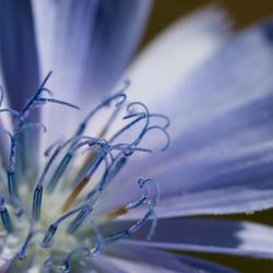 Lila en blauw