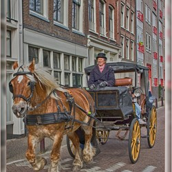 Paarden Taxi Amsterdam