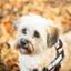 hondenherfstportret