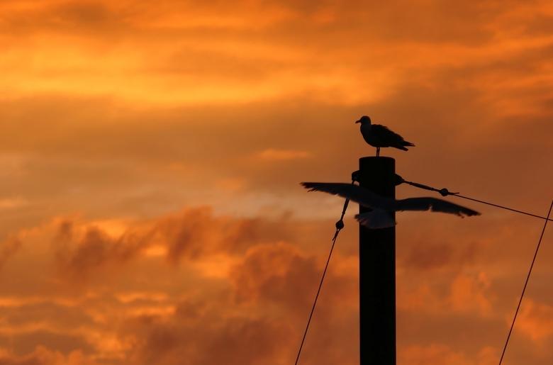 P1150496-zonsopgang - Gisteravond geen bloedmaan te zien, wel vanmorgen een rode zonsopgang.  #zoom<br /> Tot mijn verrassing werd hij vandaag 28-07-