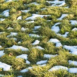 Sneeuw in het gras