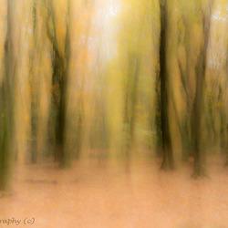 De dansende bomen in het Speulderbos
