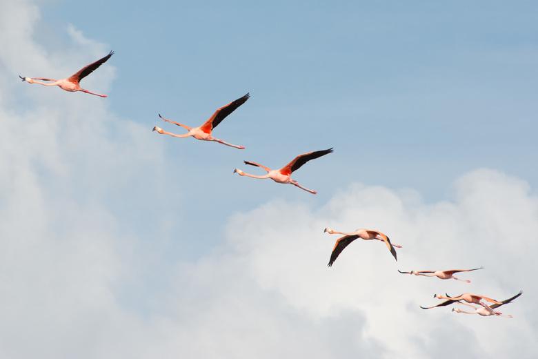 Zomer in de lucht - Een kleurrijk tafereel in Celestun, Mexico