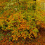 kleurenexplosie in het bos