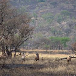 Topies in Serengeti National Park