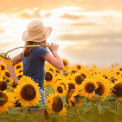 het meisje in de zonnebloemen