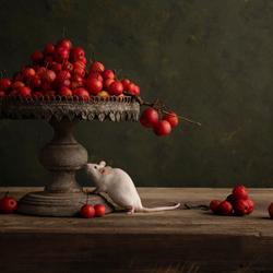 muis met appels