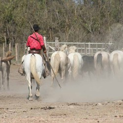 Camargue Guardien... French Coyboys