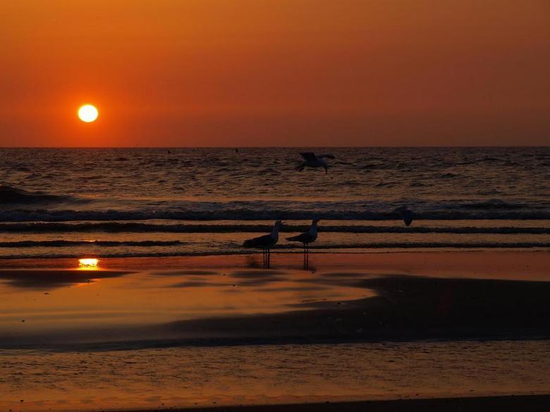 Zon Zee Zand ... - Zon, zee, zand, maar ook : Aarde, water, vuur en lucht.<br /> Het blad gelezen, kan nog veel leren....<br /> Ik vind deze foto mo