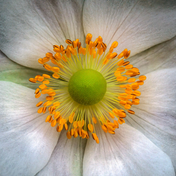 The middle of a flower