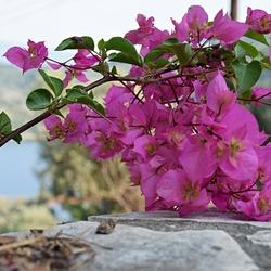 Voorjaar op Samos