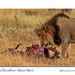 Lions Breakfast - Masai Mara
