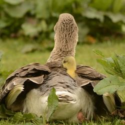 Veilig onder de vleugel