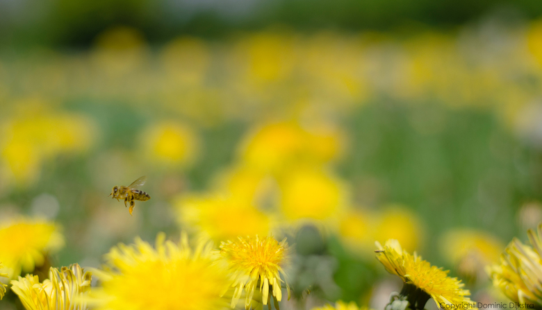 Busy bee - Busy bee's