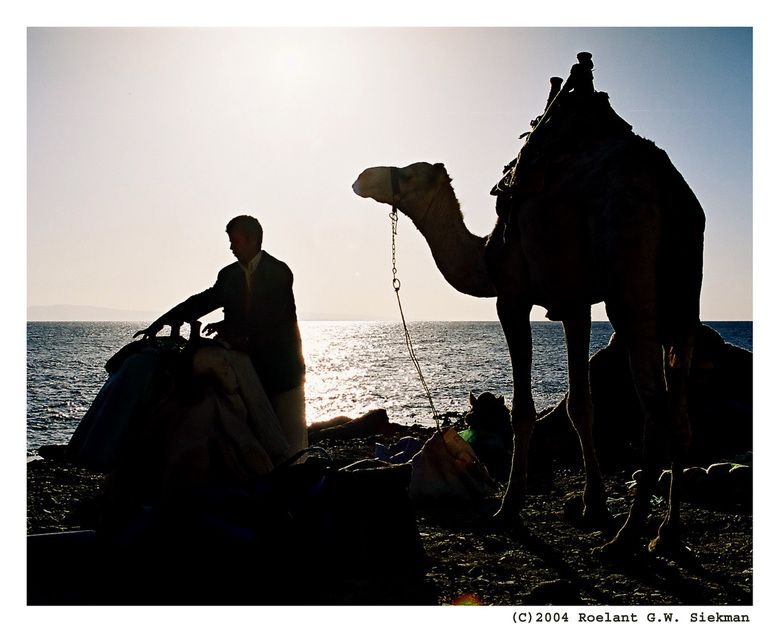 """De man en z'n kameel - Gemaakt in Egypte (Daha<img  src=""""/images/smileys/cool.png""""/> voorafgaand aan een strandduik waarbij de duikstek alleen bereikb"""