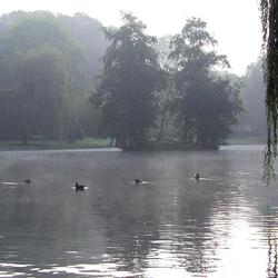 Bewerking: In the mist