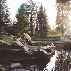 Ijsberen Dierenpark Emmen