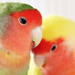 Een kleurige knuffel