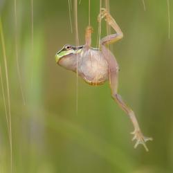 Boomkikker yoga