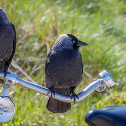 Wat heb ik nu op mijn fiets....