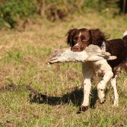 Hondenjacht wedstrijd