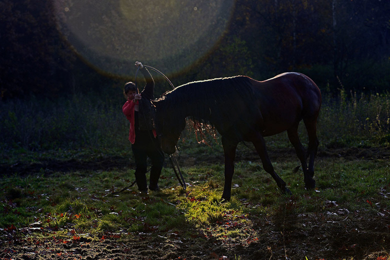 Circuspaard.