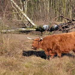 Hoogland in laagland!
