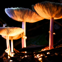 paddenstoelen nachtfoto's