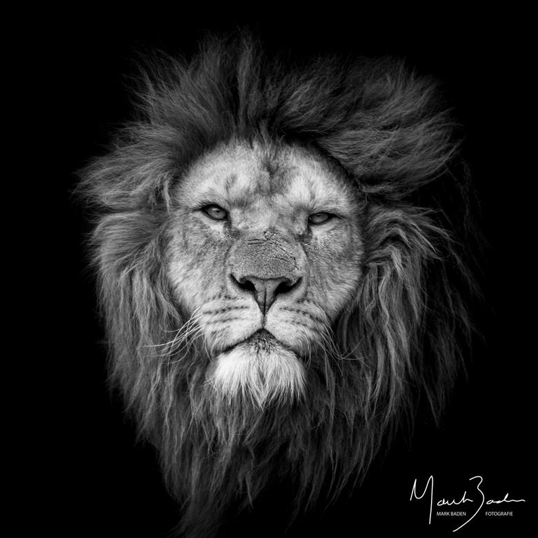 Black Lion -