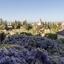 Alhambra paleis tuinen met blauweregen en gele  rozen