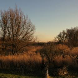 Biesbosch op zijn moois