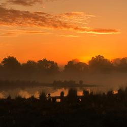 heidegebied Strijbeek in de mist