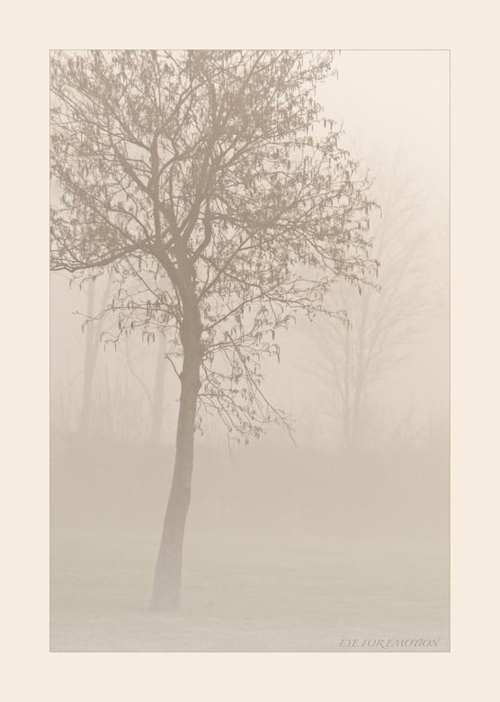 Boom in de mist... - Dit is er ook een van van de week, toen ik samen met Geertje de mist trotseerde ( en de kou ) Had alleen maar m'n 150-500mm