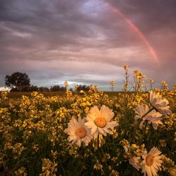 Kleurrijk landschap