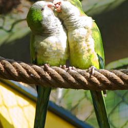 Alle liefde op een touwtje