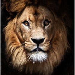 Caesar de Leeuw  (20)