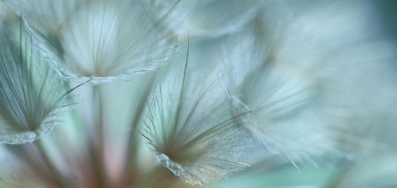 detail morgenster - een wat andere benadering van deze bloem; kleuren aangepast.